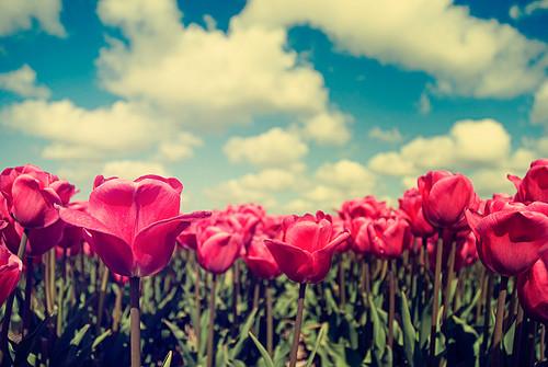 379c2-flowersphotographyhollandretrorosesredclouds-0e5766090acaf17678b76191e0cc947d_h